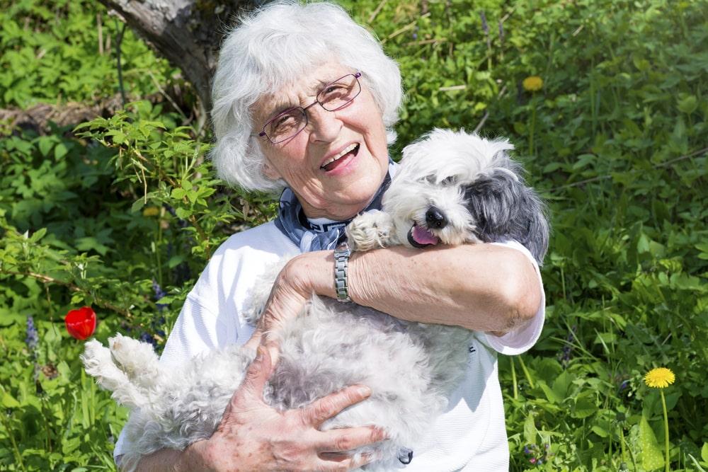 3 Best Dog Breeds for Older Adults